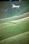 White horse on steep chalk scarp slope at Cherhill, Wiltshire, England, UK