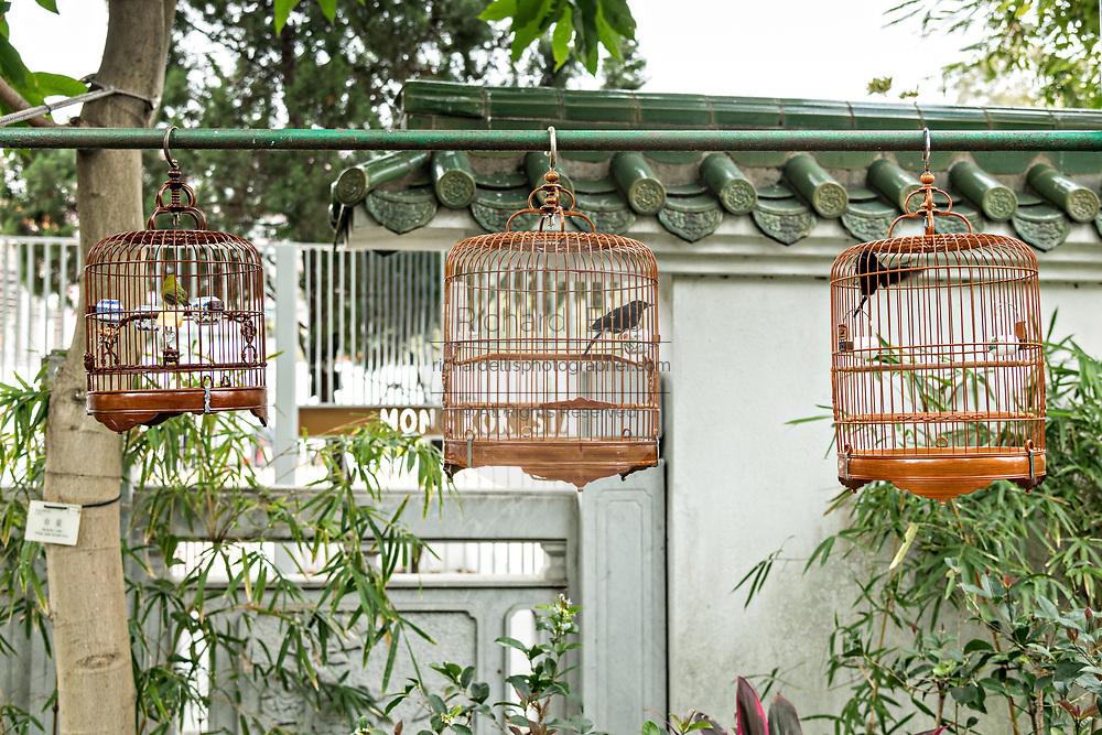 Songbirds in traditional bamboo cages at the Yuen Po Street Bird Garden in Mong Kok, Kowloon, Hong Kong.