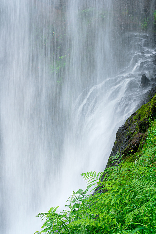 Ferns thrive in the ever-wet environment behind the veil of Lower South Falls, in Oregon's Silver Falls State Park.