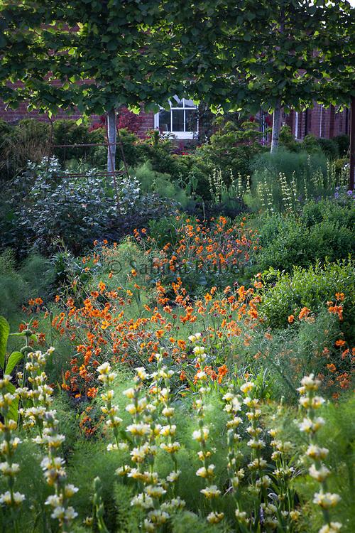 Sisyrinchium striatum and Geum 'Prinses Juliana', The Rusty Garden, Manor Farm, Cheshire
