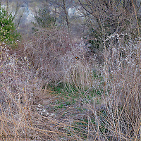 A photo of early spring foliage at the Scarborough Bluffs is photo bombed by a robin.