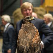 NLD/Leeuwarden/20180908 - Koning Willem Alexander en Beatrix aanwezig bij premiere de Stormruiter, Koning Willem Alexander kijkt naar een roofvogel