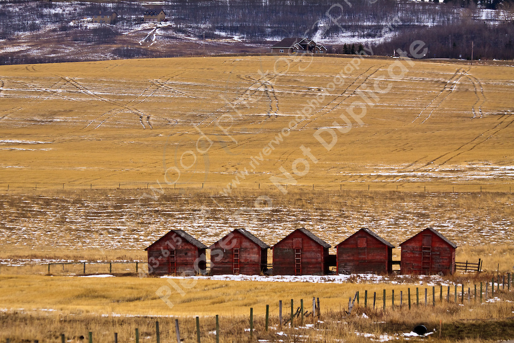 The vivid red of the barns stands out against the yellow stubble remaining in a farm field south west of Calgary...©2009, Sean Phillips.http://www.Sean-Phillips.com