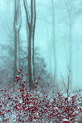 Forest scenery on a snowy day, with last leaves on trees