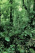Jungle Santa Elena National park, Costa Rica, Central America