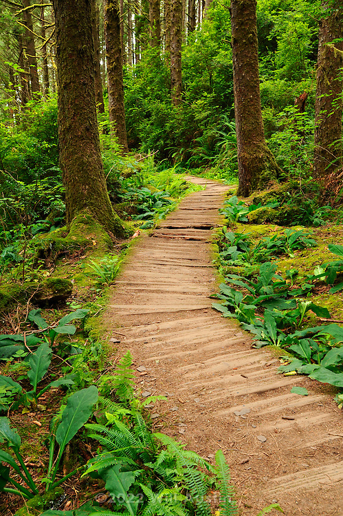 Wooden boardwalk trail in the Fern Canyon area in the Prairie Creek Redwoods State Park in California