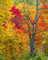 https://Duncan.co/layers-of-fall-color-in-the-forest