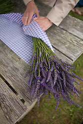 North America, United States, Washington, Sequim, hands wrapping bouquet of dried lavender at Lavender Festival, held annually each July