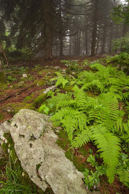 Spruce knob, West Viriginia in summer.