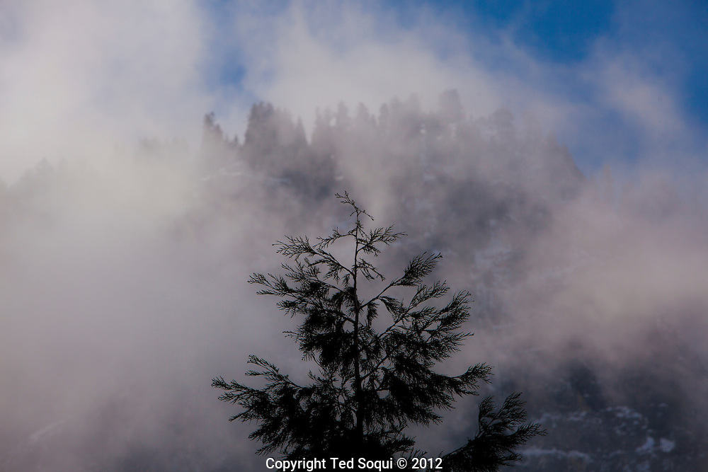 A tree with winter mist in the Yosemite Valley.