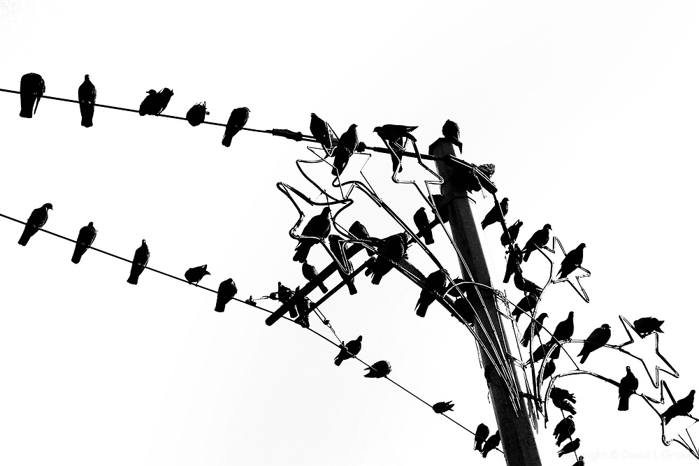 Pigeons on the tramline wires in Taksim square, Istanbul, Turkey.