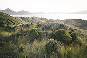 Coastal dune vegetation towards Mason Bay, The Southern Circuit, Stewart Island / Rakiura, New Zealand Ⓒ Davis Ulands   davisulands.com