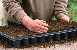 Sowing seed in modules<br /> Leveling compost