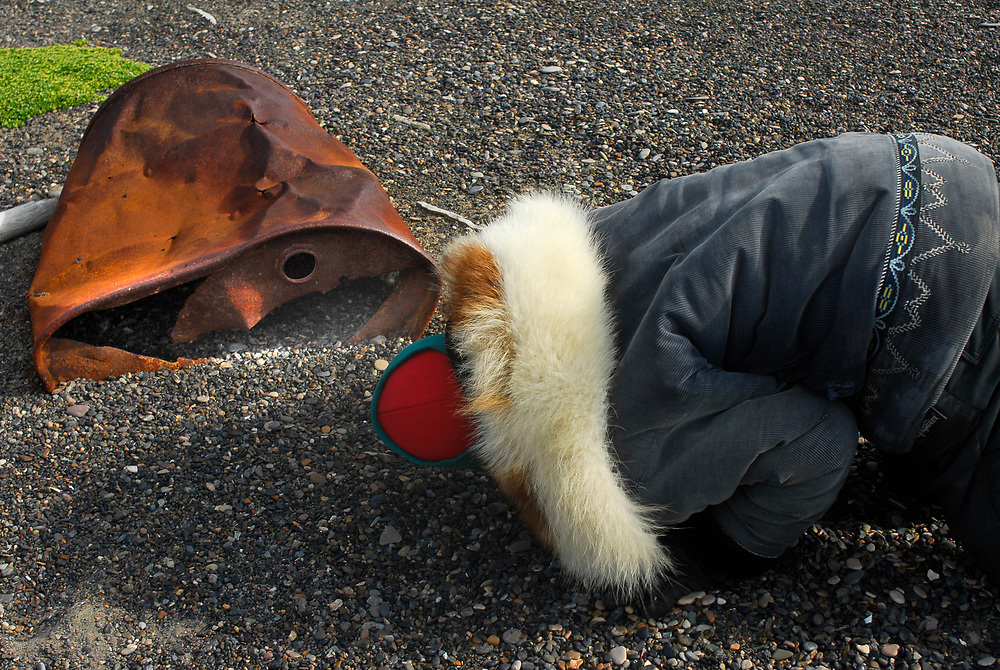 Barrow Alaska. Point Barrow, Nuvuk. Beach gravel and an old barrel. An Iñupiaq man looks for a bird's nest with eggs.