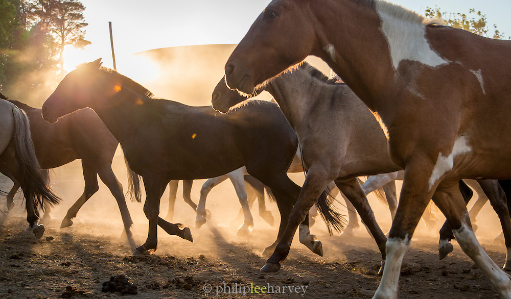Horses at sunset, Estancia Huechahue, Patagonia, Argentina, South America