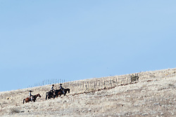 Cowboys on horseback riding up slope of hill, Ladder Ranch, west of Truth or Consequences, New Mexico, USA.