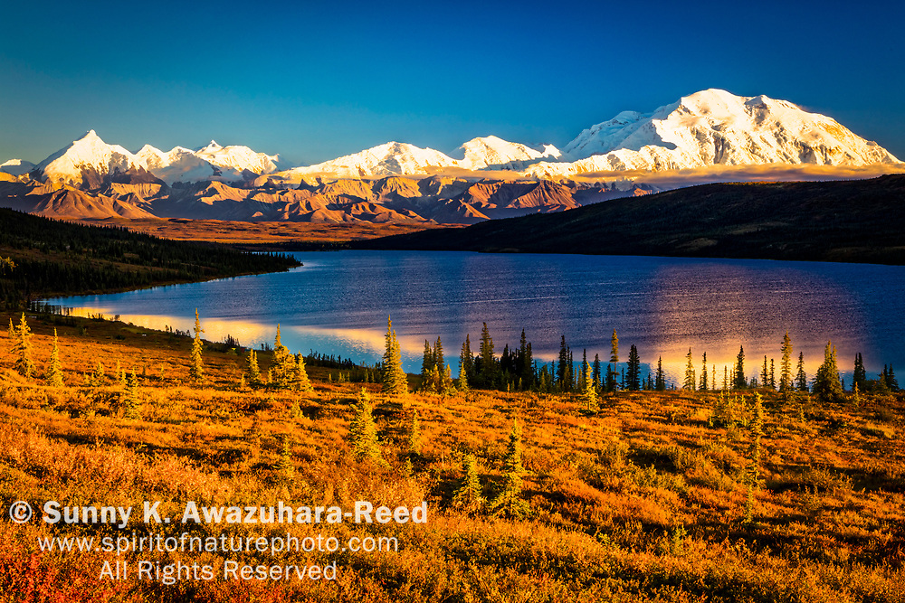 Mt. Denali (McKinley) reflects on Wonder Lake, surrounded with fall color tundra hill. Denali National Park & Preserve, Interior Alaska, Autumn.