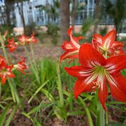 University of Florida-Spring