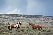 Wild horses Picasso, left and Voodoo spar under a stormy sky in the Sand Wash Basin Wild Horse Management Area in northwestern Colorado.