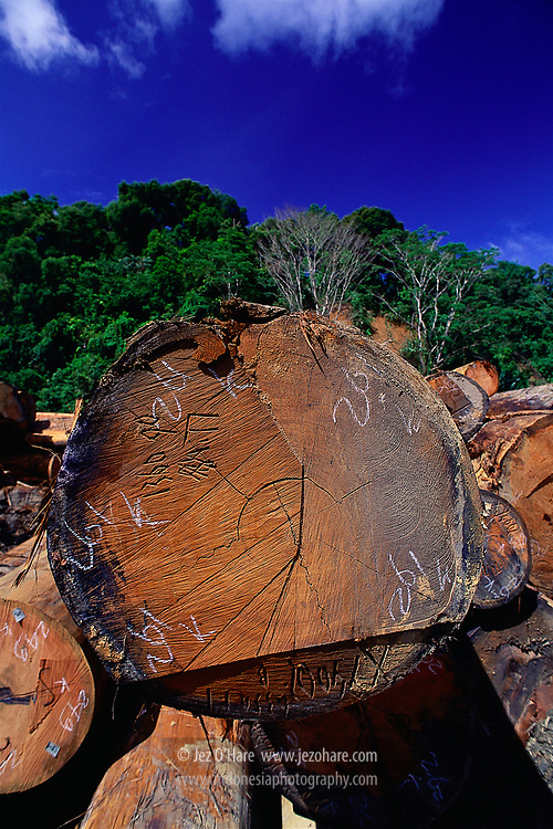 Hardwood logs, East Kalimantan, Indonesia.