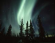 USA, Alaska, Glenallen, Aurora borealis over spruce trees