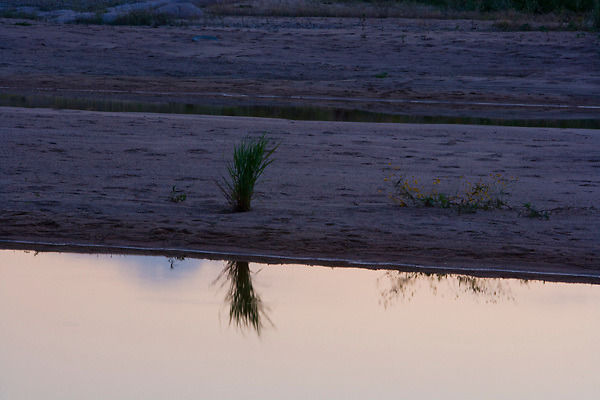 Stock photo of the reflection of vegetation growing along the banks of the Llano River in the Texas Hill Country