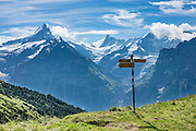 Schreckhorn (left) and Finsteraarhorn (middle) rise impressively above Grindelwald, in Switzerland, the Alps, Europe. The Finsteraarhorn (4274 m / 14,022 ft) is the highest mountain in the Bernese Alps and the most prominent peak of Switzerland (in terms of the lowest topographic contour at the mountain's base). The Schreckhorn (4078 m / 13,379 ft) is the northernmost summit rising above 4000 meters in Europe. This whole massif and surrounding glaciers were designated as part of UNESCO's Jungfrau-Aletsch World Heritage Site.