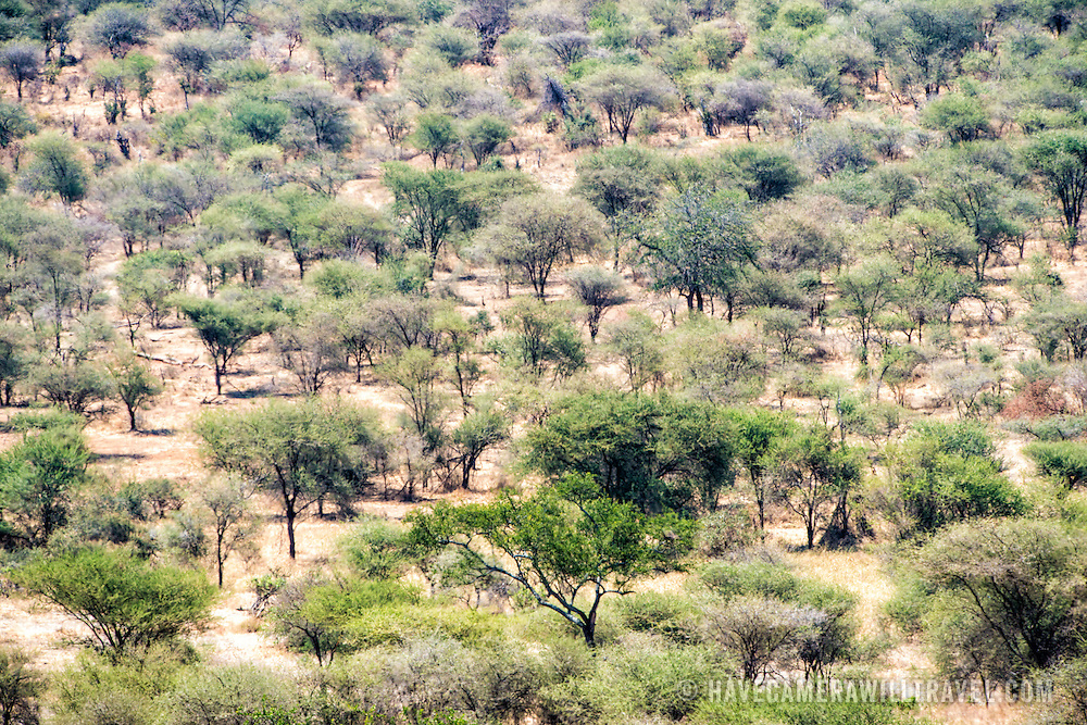 The bush landscape at Tarangire National Park in northern Tanzania not far from Ngorongoro Crater and the Serengeti.