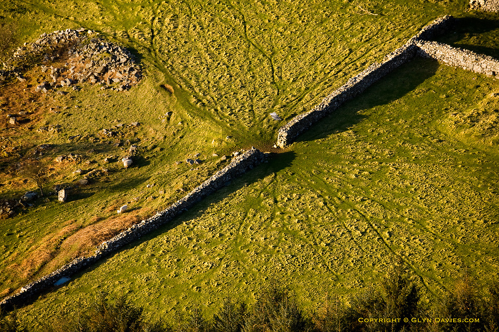 I found the prominent sheep tracks amusing, radiating rapidly either side of this narrow gateway in the high stone wall near Tŷ Uchaf.