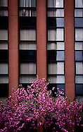 Blossom of a cherry tree in front of a graphic building's facade, Kanazawa, Japan, Asia