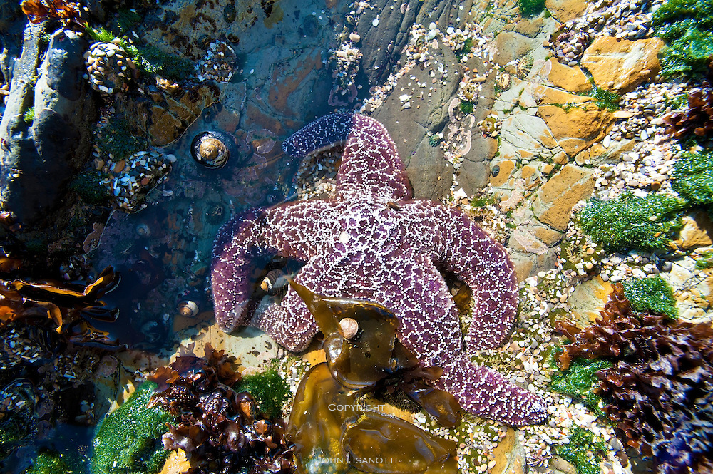 A red starfish lounges in its own private pool