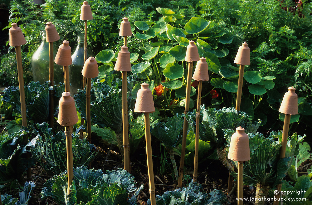 Decorative terracotta cane tops to protect eyes in the vegetable garden