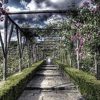 Polesden Lacy Rose Garden