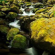 North America, United States, Northwest, Pacific Northwest, West, Washington, Olpmpic National Park, Olympic NP, Olympic, Quinnalt, Quinnalt Rain Forest, rain forest. Quinnalt Rain Forest in Olympic National Park, Washington.