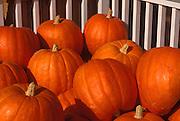 Image of pumpkins in Stowe, Vermont, American Northeast by Randy Wells