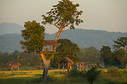 Crop guard sleep platform<br /> near Nameri National Park<br /> Assam<br /> North East India
