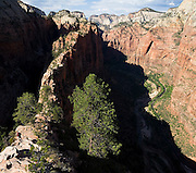 Parmenter Welty hikes down the Angels Landing trail in Zion National Park, Utah.