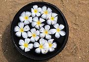 Bowl of floating frangipani flowers, Maalu Maalu Resort hotel beach, Pasikudah Bay, Eastern Province, Sri Lanka, Asia