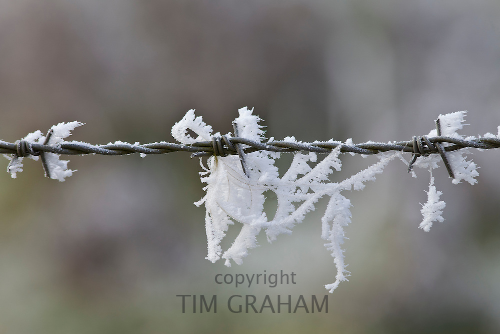 Ice crystals of hoar frost on barbed wire, UK
