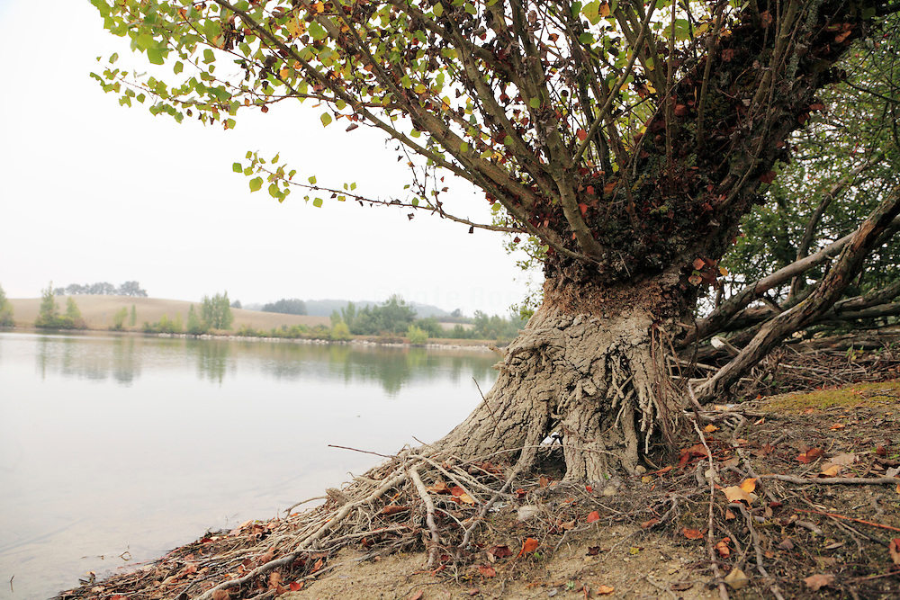 water level in a lake seen on a tree trunk