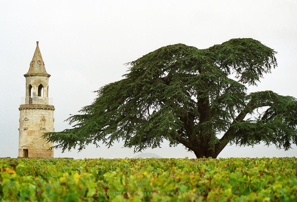 """The """"tower"""" (tour) in the vineyard of Chateau Château La Tour de By and a huge big enormous cedar tree, Bégadan, Gironde, France. Médoc Medoc Cru Bourgeois Supérieur Superieur, Bordeaux Gironde Aquitaine France Europe"""