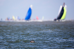 Round Texel, June 28th 2014, Texel - The Netherlands