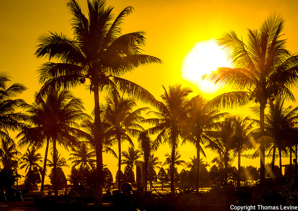Yellow orange sun and sky with silhouette of multiple palm trees. Warm lighting and a big sun. RAW to Jpg
