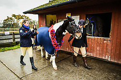 A poppy garland is worn by Sergeant Major 'Rocky' as he is led out from the Royal Navy and Royal Marines Riding Stables at Bickleigh Barracks, Plymouth, during the first ever memorial service dedicated to horses killed or injured in conflict.