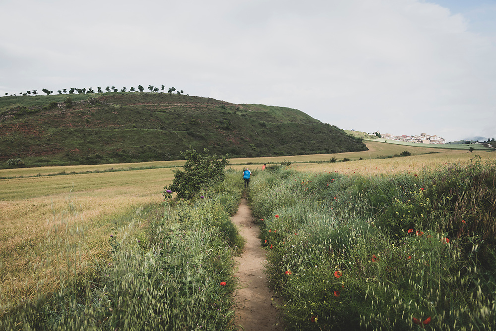 Pilgrims on the Camino de Santiago approach the small town of Cirauqui, Navarre, Spain.<br />June 4, 2018.