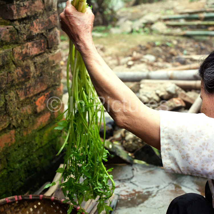 An elderly woman prepares green vegetables for lunch in the basket weaving village of Tang Tien, Bac Giang province, Vietnam.