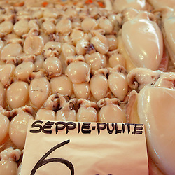 Fresh Sea Food & Fish - Squid - Chioggia - Venice Italy