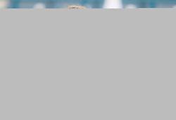 February 21, 2019 - Dubai, ARAB EMIRATES - Petra Kvitova of the Czech Republic in action during her quarter-final match at the 2019 Dubai Duty Free Tennis Championships WTA Premier 5 tennis tournament (Credit Image: © AFP7 via ZUMA Wire)