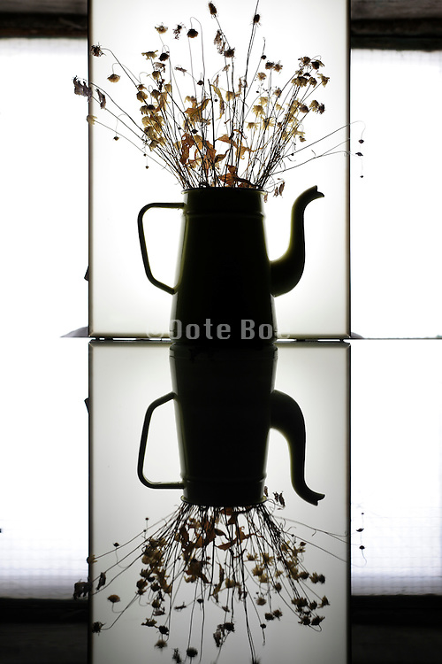 silhouette of wilted spring time flowers in old teapot