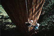 Genevieve Somers takes a first time climber up the Stagg Tree, a giant redwood,and the sixth largest tree in the world by mass.  Located on the property of the Rouche family  near Springville California the Stagg tree is nearly 100 feet in circumference.